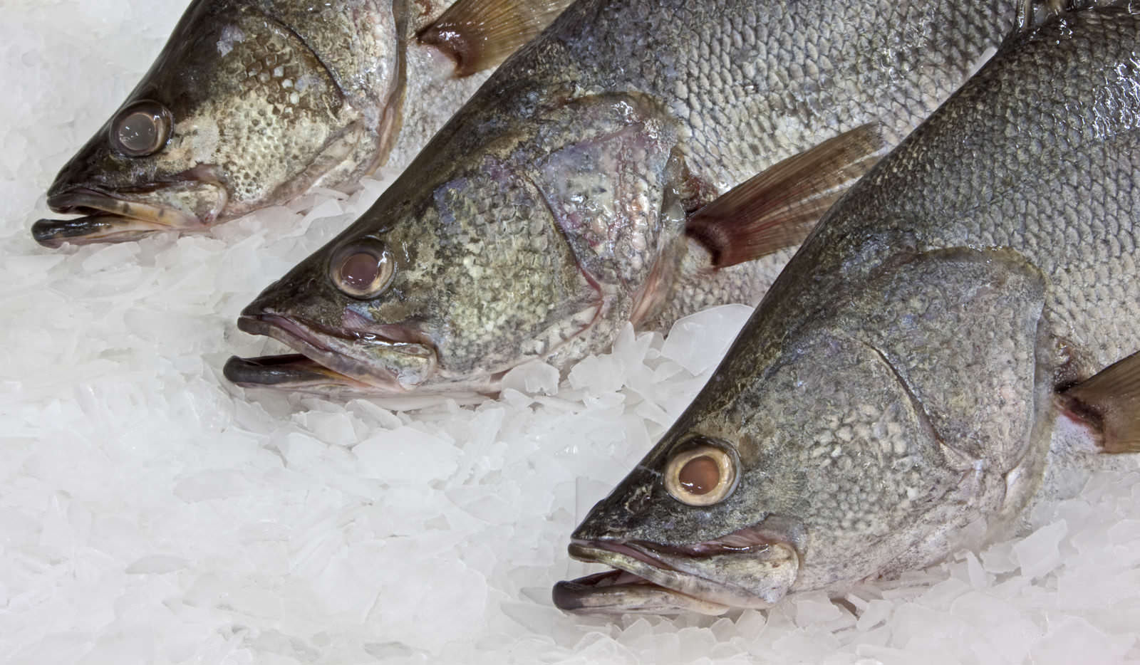 Alpha Sea Food – Only the finest seafood from Lake Victoria and the